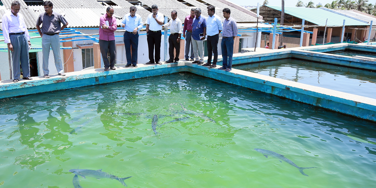 Officers of Fisheries Department of Puducherry visit the facilities at Muttukadu as a step forward in the development of brackishwater aquaculture in Puducherry in alliance with ICAR-CIBA